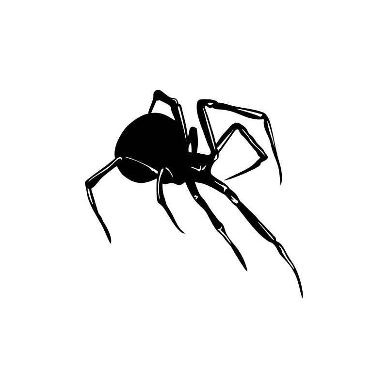 Pók falmatrica 2