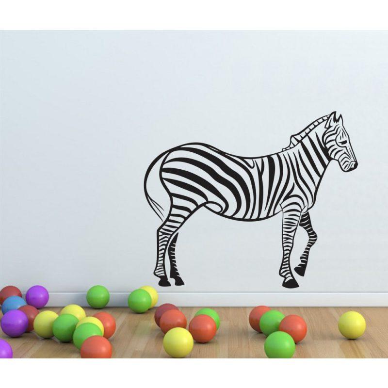 Zebra falmatrica 5