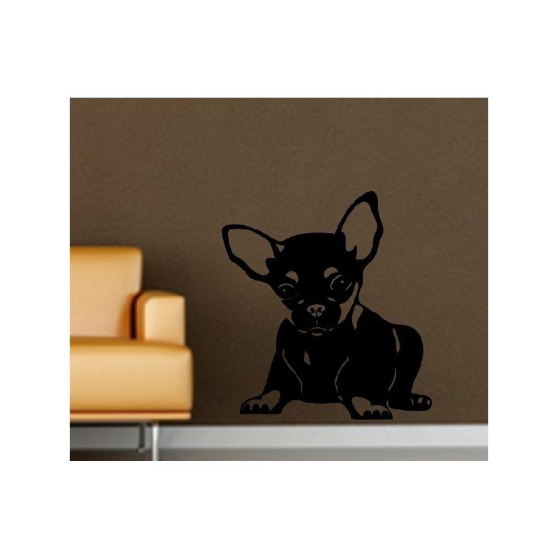 Chihuahua falmatrica