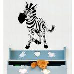 Zebra falmatrica 10
