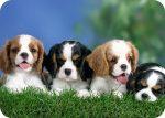 Kutyusok fényképes egérpad