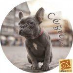 Francia bulldog hűtőmágnes egyedi névvel
